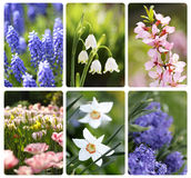 Spring flowers background stock images