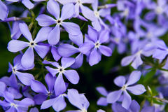 Spring flowers background Royalty Free Stock Photos
