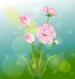 Spring and flowers Royalty Free Stock Images