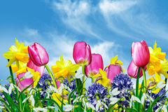 Spring flowers on a background of blue sky Royalty Free Stock Photos