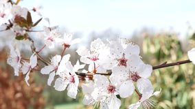 Spring flowers background stock video footage