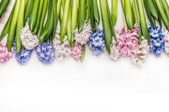 Spring flowers background with colorful Hyacinths on white wooden, top view. Royalty Free Stock Photos