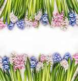 Spring flowers background with colorful Hyacinths on white wooden stock photos