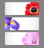 Spring flowers background design Royalty Free Stock Photos