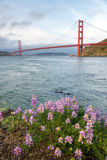 Spring flowers on the background of the Golden Gate Bridge, San Royalty Free Stock Photos