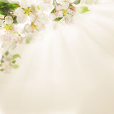 Spring Flowers on  Background Stock Images