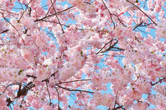 Spring flowers background with pink blossom stock photography