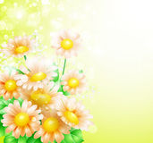 Spring flowers background Stock Photos