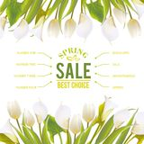 Spring flowers backround with text lettering. Royalty Free Stock Photo