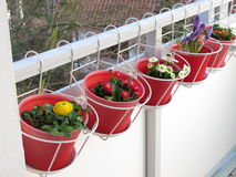 Spring flowers on the balcony Royalty Free Stock Photos