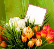 Spring flowers with banner add Stock Photo