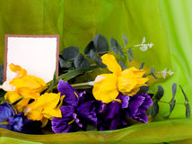 Spring flowers with banner add. Beautiful spring flowers with banner add Stock Images