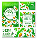 Spring flowers banner and greeting card template. White flowers of daisy and chamomile with green leaf cartoon poster for Hello Spring concept and springtime Royalty Free Illustration