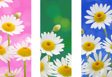 Spring flowers banners Stock Photo
