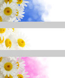 Spring flowers banners Royalty Free Stock Images