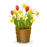 Spring flowers in a barrel Stock Photo