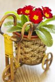 Spring flowers in basket Royalty Free Stock Photography