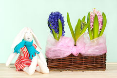 Spring flowers in the basket Royalty Free Stock Image