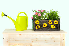 Spring flowers in the basket Royalty Free Stock Photography