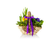 Spring flowers in a basket Royalty Free Stock Photo
