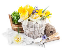 Spring flowers in basket with garden tools Stock Photography