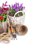Spring flowers in basket with tools for gardening Stock Images