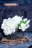 Spring flowers in basket Stock Photos