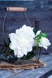Spring flowers in basket Stock Image