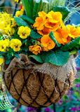Spring flowers in a basket Stock Images