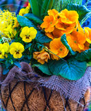 Spring flowers in a basket Stock Photos