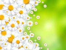 Spring flowers beautiful background. Illustration Stock Image