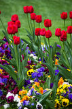 Spring flowers. Beautiful colorful garden flowers on green grass Royalty Free Stock Photo