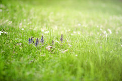 Spring flowers in the beautiful grass field. Selective focus Stock Photos