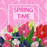 Spring flowers. Beautiful tulips on an abstract pink background Royalty Free Stock Images