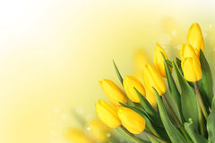 Spring Flowers. Beautiful Yellow Tulips Bouquet Royalty Free Stock Image