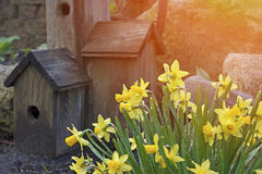 Spring flowers with bird house concept and bright sun with copys. Pace.  Spring summer weather with outdoors and fresh air and life love and happiness Royalty Free Stock Photos