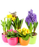 Spring flowers with birds nest. colorful easter decoration Stock Images