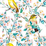 Spring flowers and birds. Pattern. Watercolor. Vector. Flowering branch. Stock Photo
