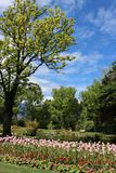 Spring flowers in bloom, Queenstown Gardens, NZ. View of pink tulips in bloom in a flower bed in Queenstown Gardens with a small pond behind and trees coming Stock Images