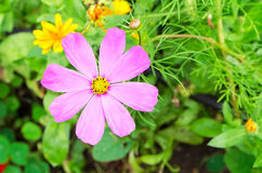 Spring flowers. Blooming in the garden Stock Photos