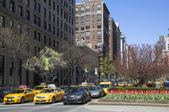 Spring flowers blooming at Park Avenue in Manhattan Stock Photo