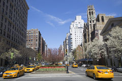 Spring flowers blooming at Park Avenue in Manhattan Stock Image