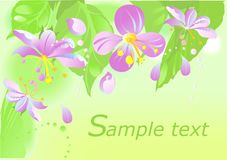 Spring flowers blossom Stock Photo