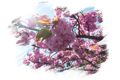 Spring flowers blossom background Stock Images