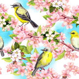 Spring flowers blossom, birds with blue sky. Floral seamless pattern. Vintage watercolor Royalty Free Stock Photos