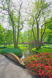 Spring flowers and blossom in Keukenhof  Holland Stock Image