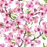 Spring flowers blossom sakura, cherry or apple tree. Floral seamless pattern. Watercolor. Spring flowers blossom sakura, cherry, apple . Floral seamless pattern vector illustration
