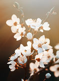 Spring flowers blossom in sunny day. Stock Photo