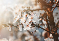 Spring flowers blossom in sunny day Stock Photography