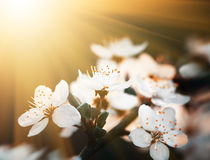 Spring flowers blossom in sunny day Stock Photo